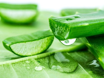 Aloe Vera Suyu Zayıflatır mı? Faydaları ve Zararları Nelerdir? Nasıl İçilir?