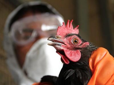 Avian İnfluenza (Kuş Gribi) Nedir? Bulaşmaya Yolları ve Belirtileri