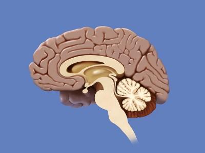 Beyincik Sarkması Nedir? Belirtileri Nelerdir? Ameliyatı ve Bitkisel Tedavisi