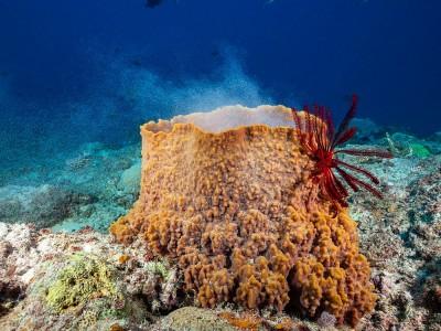 Deniz Süngeri Nedir? Ne İşe Yarar? Yenir mi?
