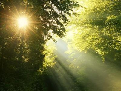 Güneş Işığının Faydaları ve Zararları Nelerdir?