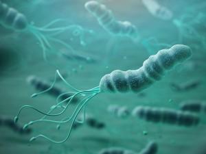 Helikobakter Pilori Ne Demek? Neden Olur? Bitkisel Tedavisi ve Diyeti