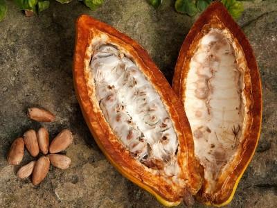 Kakao Meyvesi Yenir mi? Fiyatı Ne Kadar? Nerede Yetişir?