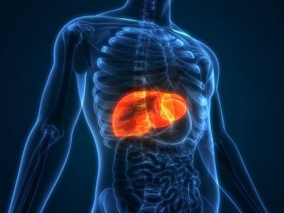 Karaciğer Büyümesi Neden Olur? Tehlikeli mi? Bitkisel Tedavisi Nasıl Yapılır?