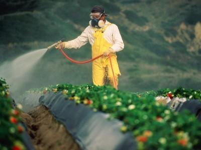Pestisit Nedir? Pestisitlerin İnsan Sağlığına Zararları