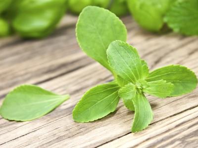 Stevia Bitkisi Nedir? Nasıl Kullanılır? Nasıl Yetiştirilir?