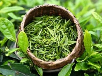 Yeşil Çay Temizleme Maskesi Nedir? Yapımı, Faydaları, Kullananlar ve Yorumlar
